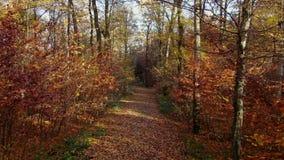 Δασικός δρόμος μέσω ενός φθινοπωρινού δάσους απόθεμα βίντεο