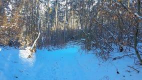 Δασικός δρόμος μέσω του δάσους στοκ φωτογραφίες με δικαίωμα ελεύθερης χρήσης