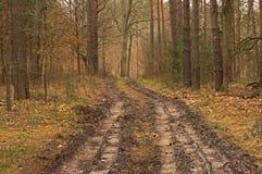 Δασικός δρόμος - πρώιμο ελατήριο στοκ φωτογραφία
