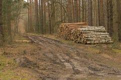 Δασικός δρόμος - πρώιμο ελατήριο στοκ φωτογραφία με δικαίωμα ελεύθερης χρήσης