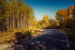 Δασικός δρόμος φθινοπώρου Στοκ εικόνα με δικαίωμα ελεύθερης χρήσης