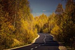 Δασικός δρόμος φθινοπώρου Στοκ Φωτογραφία