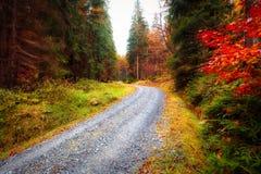 Δασικός δρόμος φθινοπώρου Στοκ Εικόνα