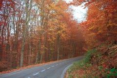 Δασικός δρόμος φθινοπώρου Στοκ φωτογραφίες με δικαίωμα ελεύθερης χρήσης