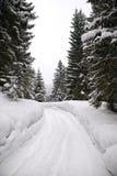 δασικός δρόμος χιονώδης Στοκ Φωτογραφία