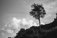 Δασικός ουρανός δέντρων γραπτός στοκ εικόνες με δικαίωμα ελεύθερης χρήσης