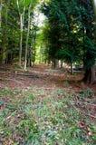 Δασικός περίπατος φθινοπώρου με τα χρώματα φθινοπώρου στο έδαφος στοκ φωτογραφία