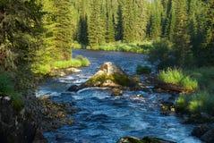 δασικός ποταμός βουνών Στοκ Φωτογραφίες