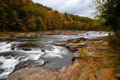 Δασικός ποταμός βράχων φθινοπώρου στα δάση Στοκ Εικόνες