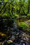 Δασικός ποταμός διαφοράς φύσης χρωμάτων δέντρων στοκ εικόνες