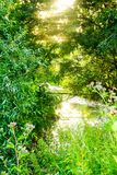 Δασικός ποταμός μια καυτή θερινή ημέρα στοκ φωτογραφίες