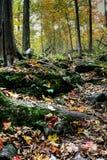 δασικός ποταμός μικρός Στοκ εικόνα με δικαίωμα ελεύθερης χρήσης