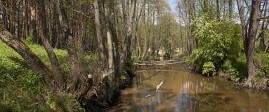 Δασικός ποταμός πανοράματος Στοκ Εικόνα