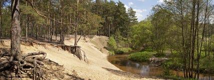 Δασικός ποταμός πανοράματος Στοκ Φωτογραφία