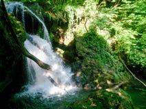 Δασικός ποταμός στα βουνά, τοπίο φύσης με τα δέντρα και ποταμός Στοκ Εικόνες