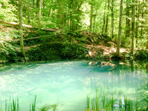 Δασικός ποταμός στα βουνά, τοπίο φύσης με τα δέντρα και ποταμός Στοκ φωτογραφία με δικαίωμα ελεύθερης χρήσης