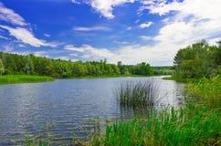 Δασικός ποταμός στην ηλιόλουστη ημέρα Στοκ εικόνες με δικαίωμα ελεύθερης χρήσης