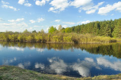 Δασικός ποταμός τοπίων άνοιξη Στοκ Εικόνα