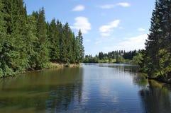δασικός ποταμός τοπίων Στοκ φωτογραφίες με δικαίωμα ελεύθερης χρήσης
