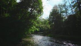 Δασικός ποταμός το καλοκαίρι φιλμ μικρού μήκους