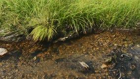 Δασικός ποταμός το καυτό καλοκαίρι απόθεμα βίντεο