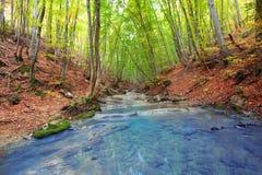 δασικός ποταμός στοκ φωτογραφία με δικαίωμα ελεύθερης χρήσης