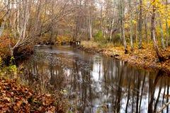 δασικός ποταμός Στοκ Φωτογραφίες