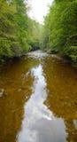 δασικός ποταμός Στοκ Εικόνες