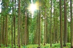 δασικός πράσινος ηλιόλο&ups Στοκ φωτογραφία με δικαίωμα ελεύθερης χρήσης