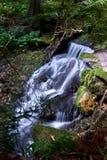 δασικός πράσινος ποταμός Στοκ Εικόνες