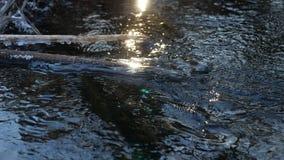 Δασικός ρέοντας όμορφος παγωμένος πάγος ποταμών σε έναν ξηρό κλάδο που ταλαντεύεται, φως του ήλιου, τοπίο έντονου φωτός φύσης ήλι Στοκ εικόνα με δικαίωμα ελεύθερης χρήσης