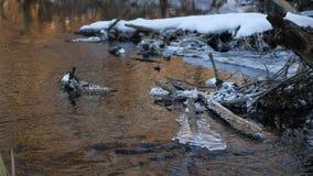 Δασικός ρέοντας όμορφος παγωμένος πάγος ποταμών σε έναν ξηρό κλάδο που ταλαντεύεται, φως του ήλιου φύσης, τοπίο έντονου φωτός ήλι Στοκ Εικόνες