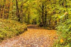 Δασικός δρόμος το φθινόπωρο στοκ φωτογραφίες