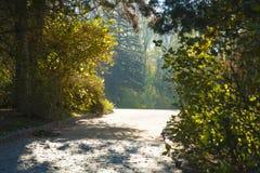Δασικός δρόμος φθινοπώρου αναμμένος με το φως του ήλιου Στοκ φωτογραφία με δικαίωμα ελεύθερης χρήσης