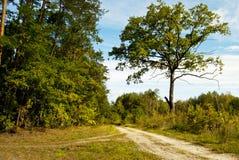 Δασικός δρόμος. Στοκ Φωτογραφία