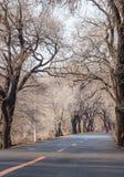 Δασικός δρόμος Στοκ Εικόνες