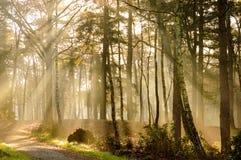 Δασικός δρόμος sunrays Στοκ φωτογραφία με δικαίωμα ελεύθερης χρήσης