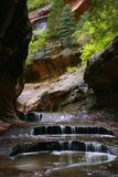 δασικός υπόγειος αυλα& στοκ φωτογραφίες με δικαίωμα ελεύθερης χρήσης