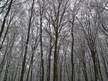 Δασικός υψηλός χειμώνας στοκ φωτογραφίες με δικαίωμα ελεύθερης χρήσης