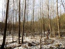 δασικός χειμώνας ήλιων φύσης όμορφο δάσος ανασκόπησης οι ακτίνες ανασκόπησης κλείνουν να καταρρίψουν το δέντρο επάνω Τοπίο φύσης  Στοκ Φωτογραφία