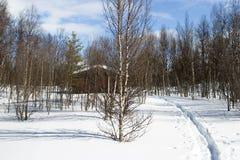 δασικός χειμώνας καμπινών Στοκ Εικόνες