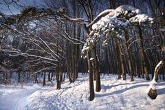 δασικός χειμώνας λυκόφα&tau Στοκ Φωτογραφία