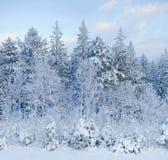 δασικός χειμώνας νεράιδω&n Στοκ φωτογραφία με δικαίωμα ελεύθερης χρήσης