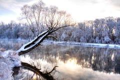 δασικός χειμώνας ποταμών Στοκ Φωτογραφία