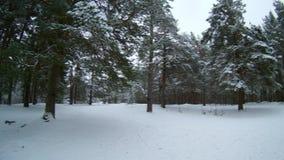 Δασικός χειμώνας Ρωσία απόθεμα βίντεο