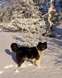 δασικός χειμώνας σκυλιών Στοκ Φωτογραφία