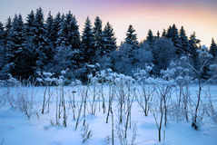 δασικός χειμώνας συνόρων Στοκ Φωτογραφίες