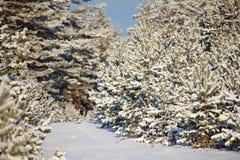 δασικός χειμώνας τοπίων Στοκ φωτογραφίες με δικαίωμα ελεύθερης χρήσης