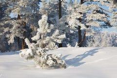 δασικός χειμώνας τοπίων Στοκ Εικόνα