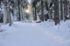 δασικός χειμώνας τοπίων στοκ εικόνες